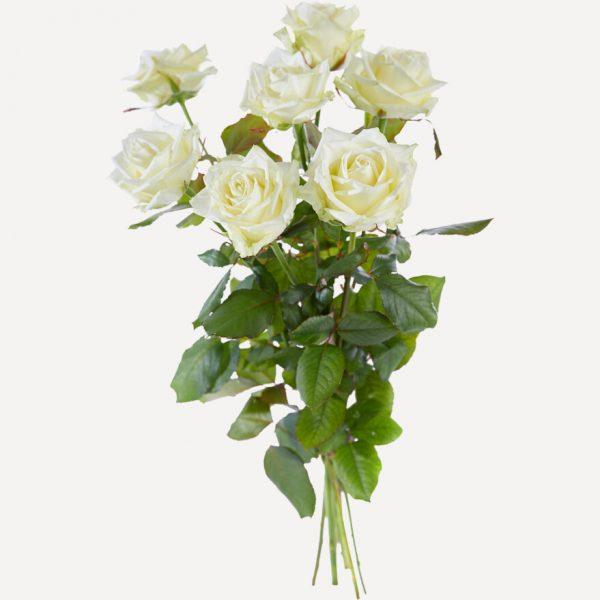 Losse rozen wit